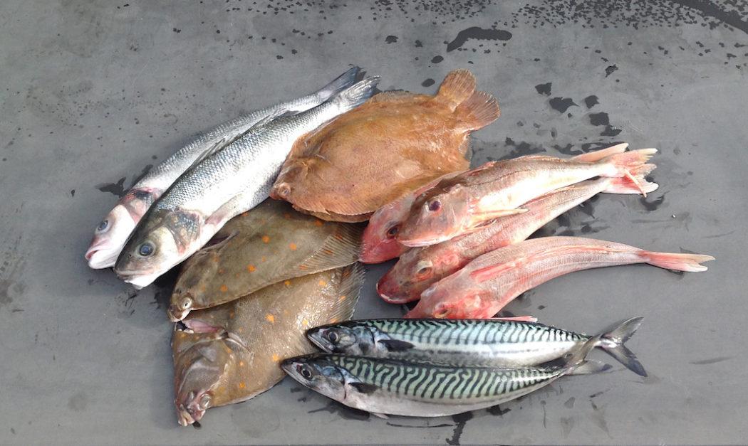 Standsted Park Farm Shop Fish