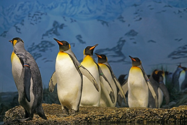 Google SEO Penguin Algorithm Update