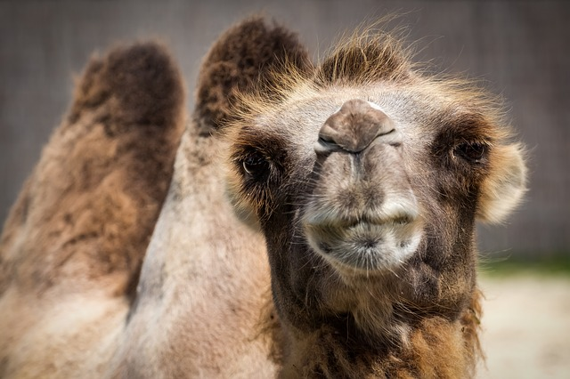 Quarterly Plan Camel
